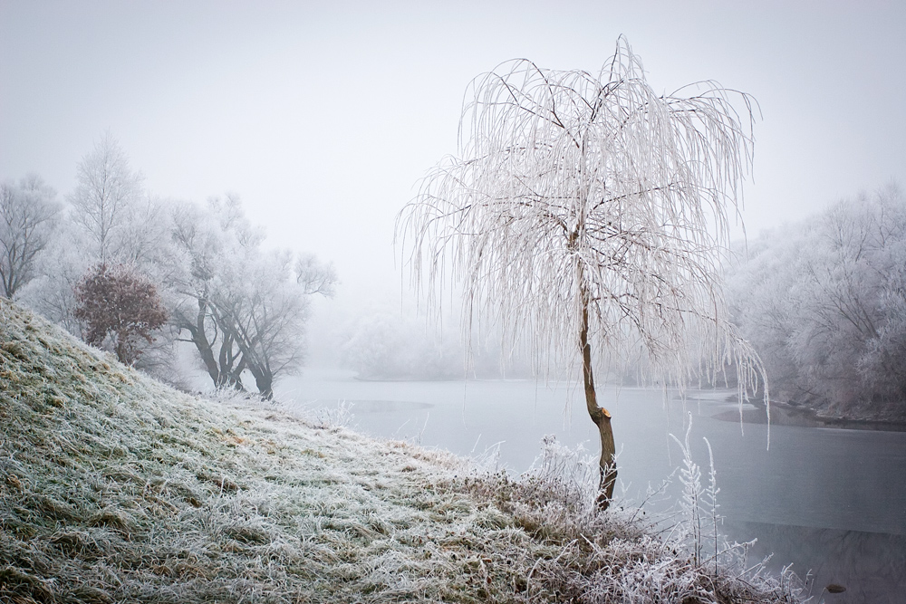 Frost VII